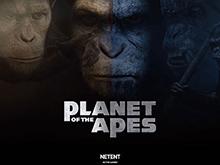 Онлайн автомат Planet Of The Apes на две зоны с независимым вращением барабанов